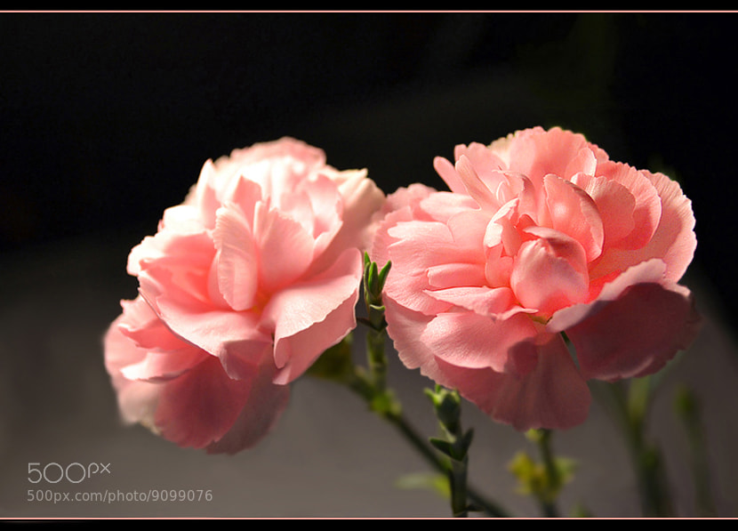 Photograph Two.... by Ирина Никитина on 500px