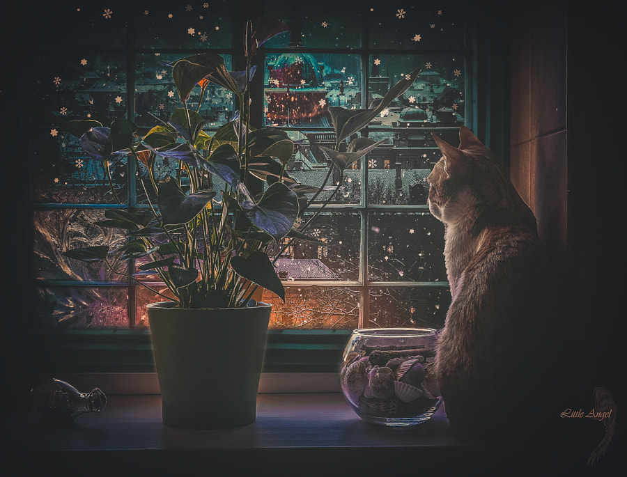Photograph Dreaming Cat by Kate L.A. on 500px
