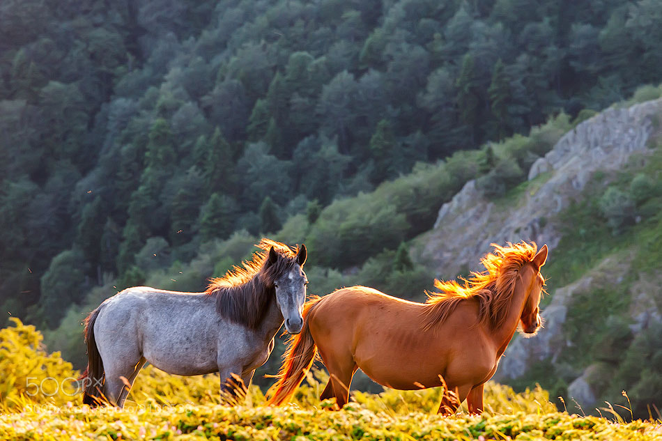 Photograph Wild Horses by Evgeni Dinev on 500px
