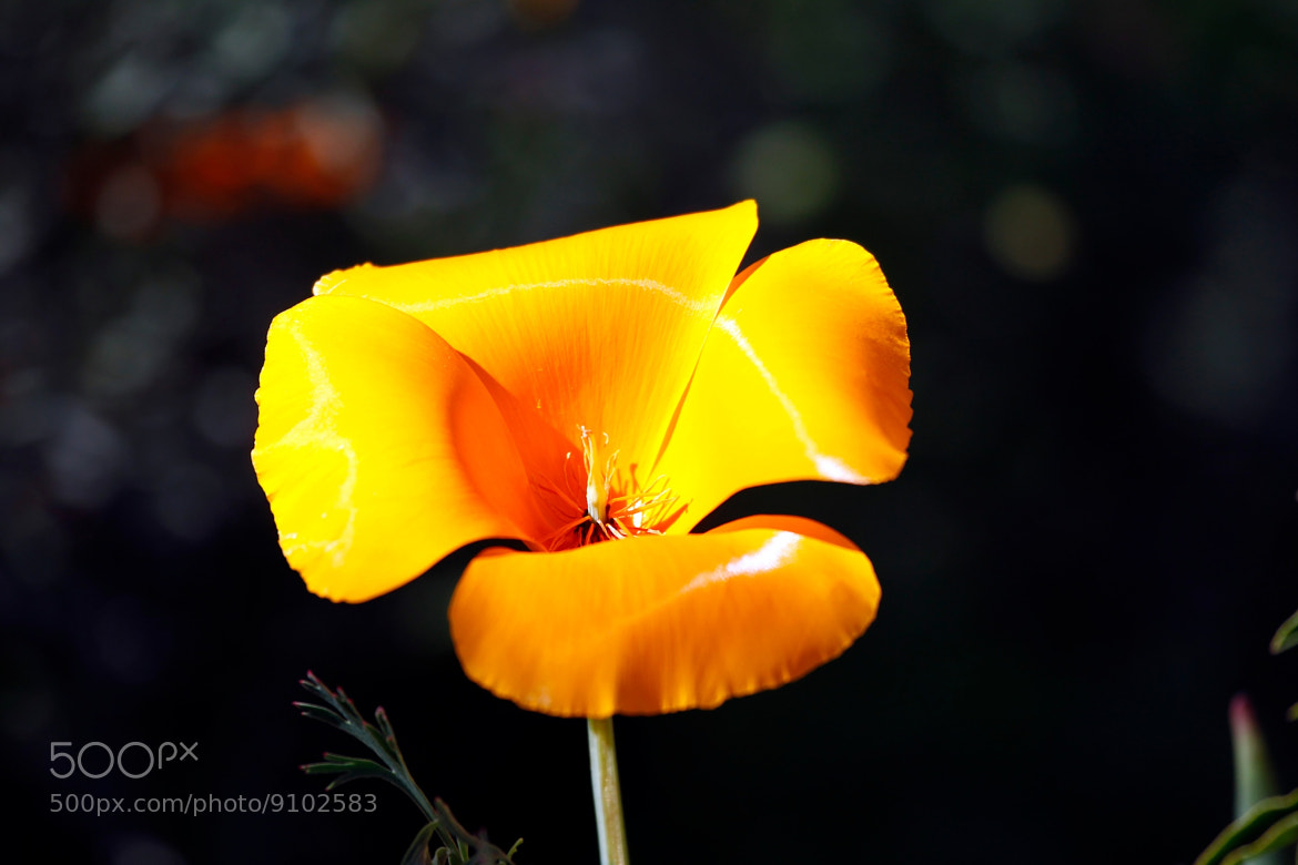Photograph Yellow flower by Josefina Macchia on 500px