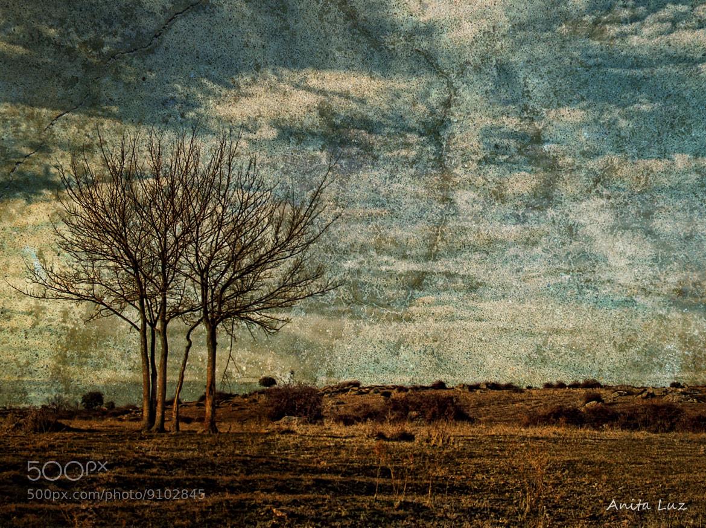 Photograph El silencio del olvido by Anita Luz on 500px