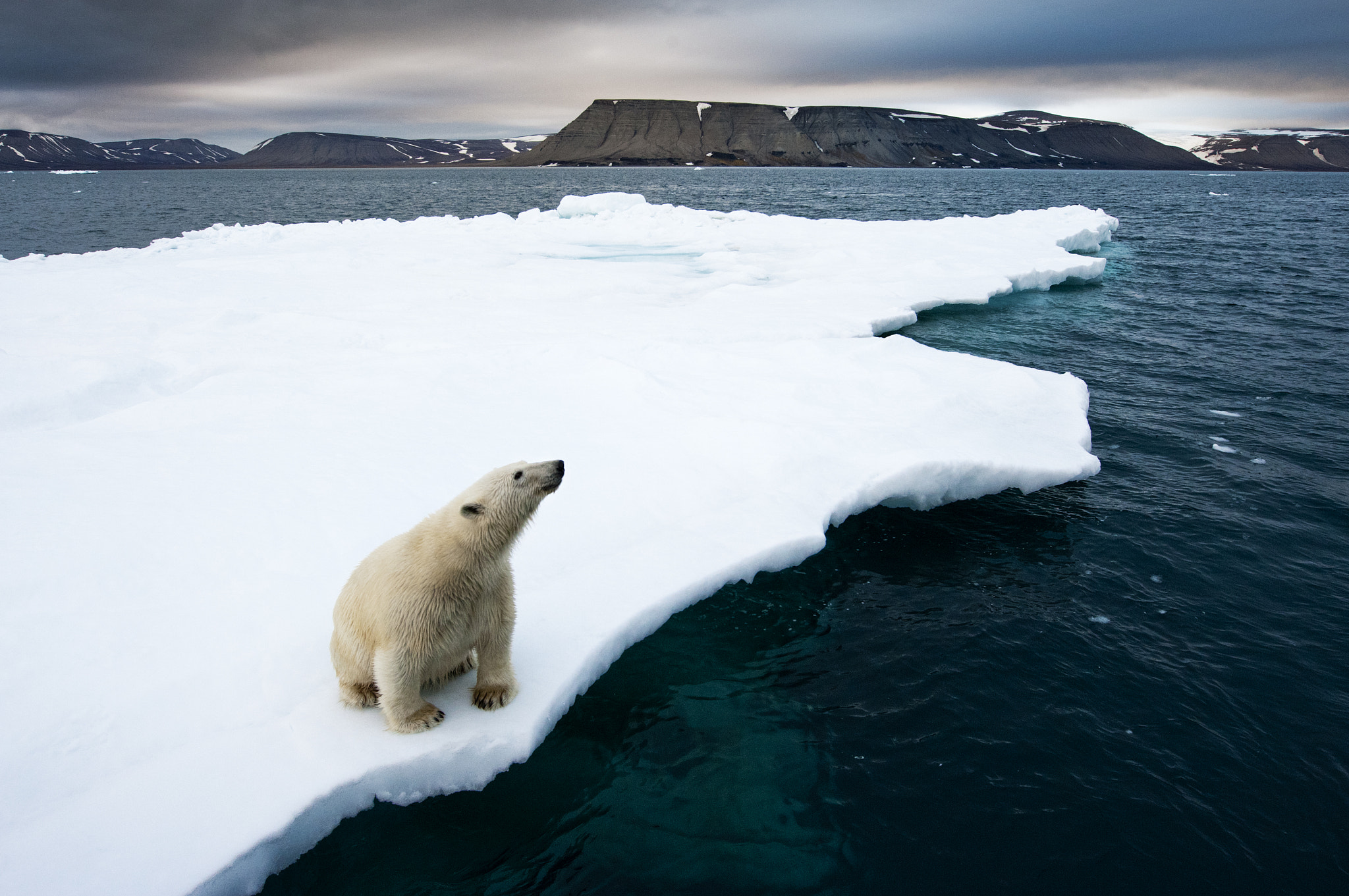 Photograph Polar Bear on Melting Ice by Paul Souders | WorldFoto on 500px