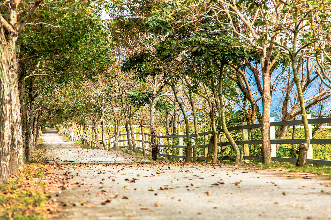 Photograph The lane  by Tommy Hsieh on 500px