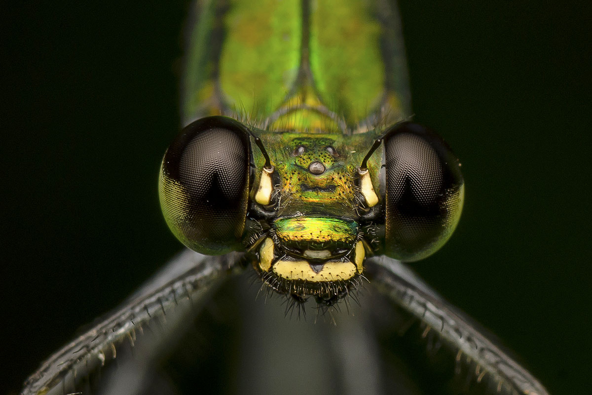 Photograph Green Wizard by Marcus Kam on 500px