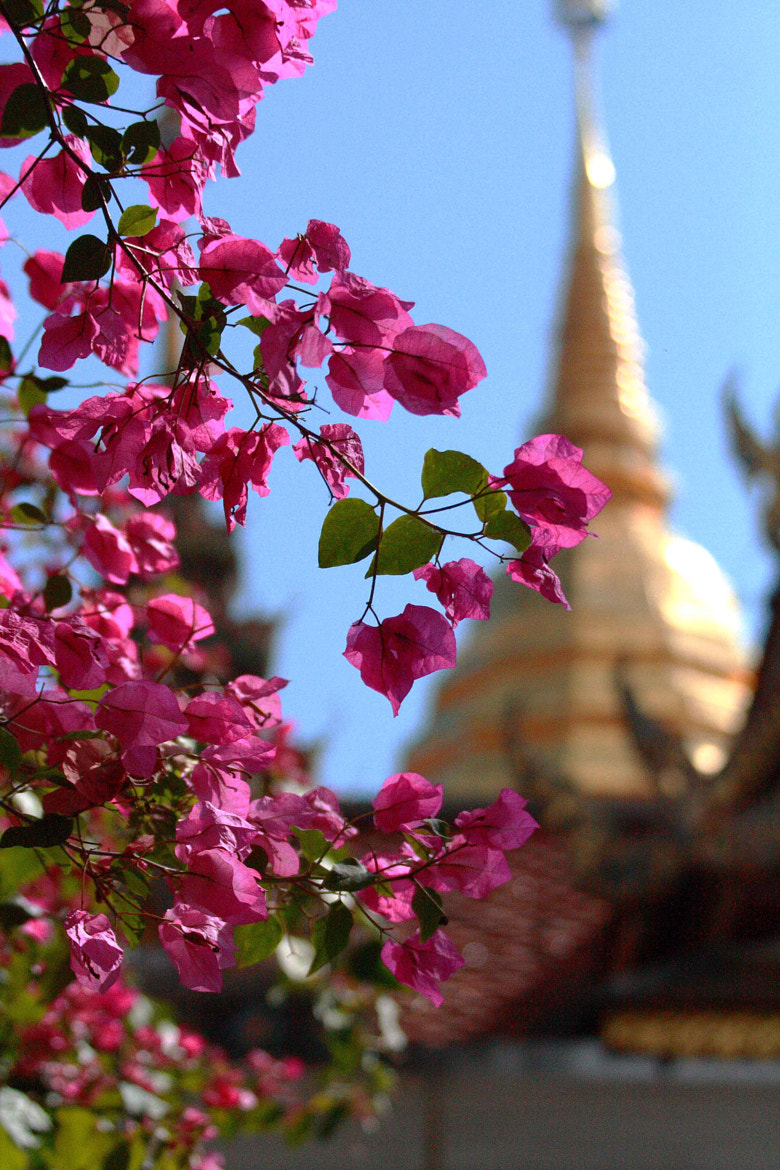 Photograph Temple Flowers by Mr Traraw on 500px