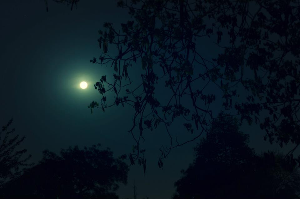 Photograph A night with the Moon  by Tanvi Sharma on 500px