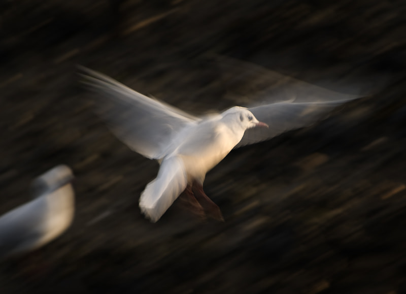 Photograph SEAGULL STUDY 17 by Anne McGrath on 500px