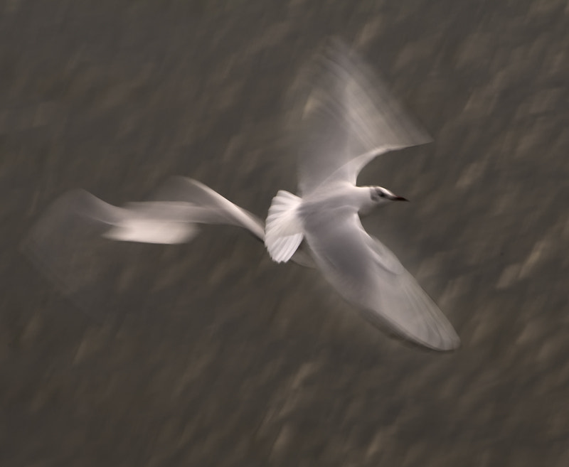 Photograph SEAGULL STUDY 24 by Anne McGrath on 500px