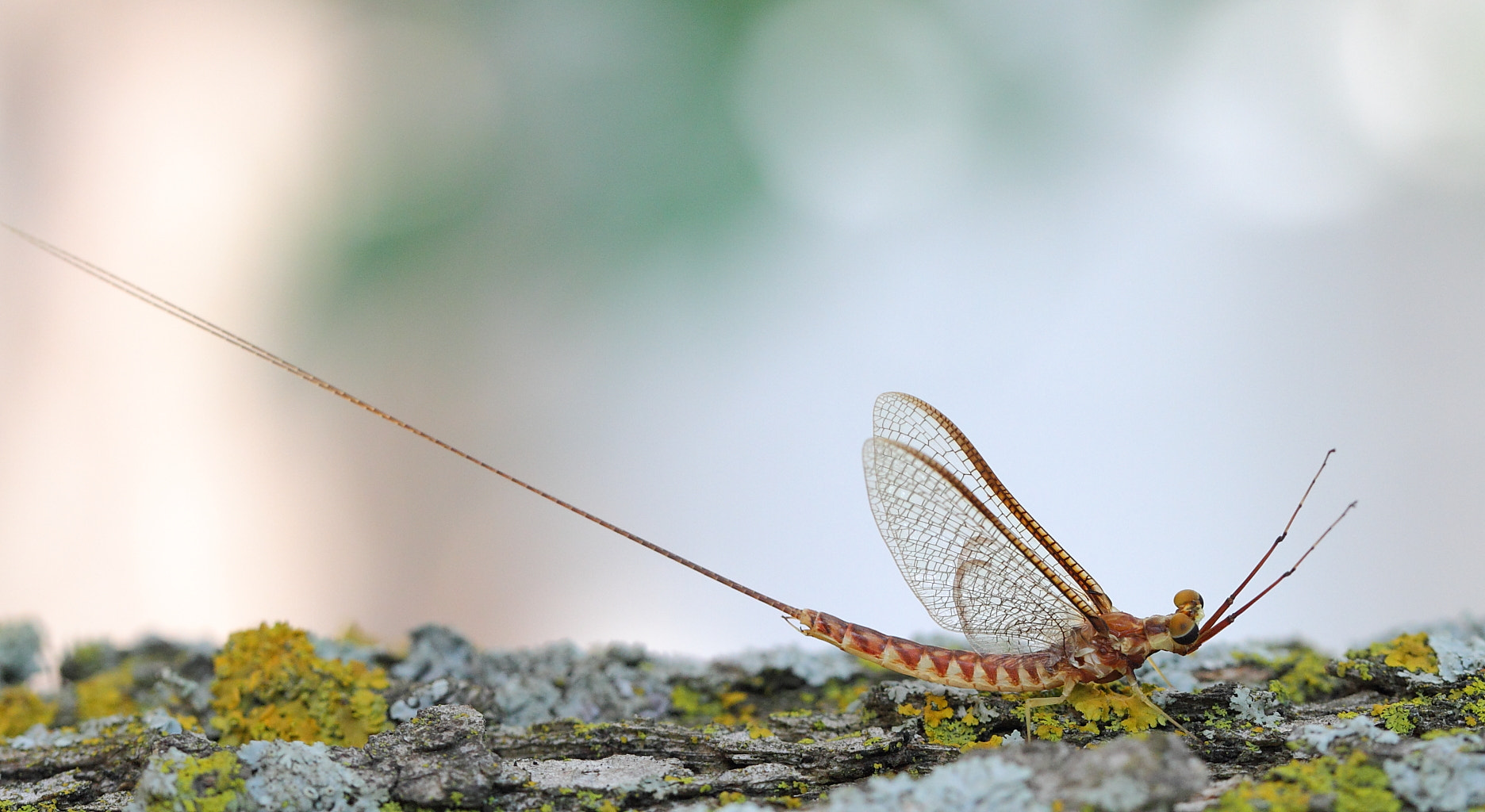 Photograph delicate wings by H Singh on 500px