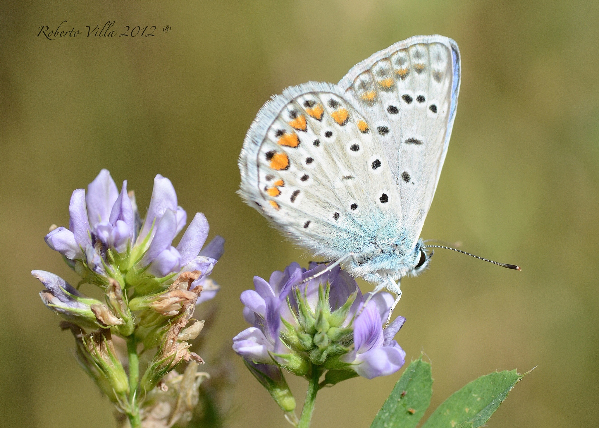 Photograph Butterfly by Roby Villa on 500px
