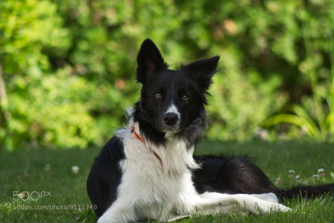 Photograph Jack the dog by Jan Hasenbichler on 500px