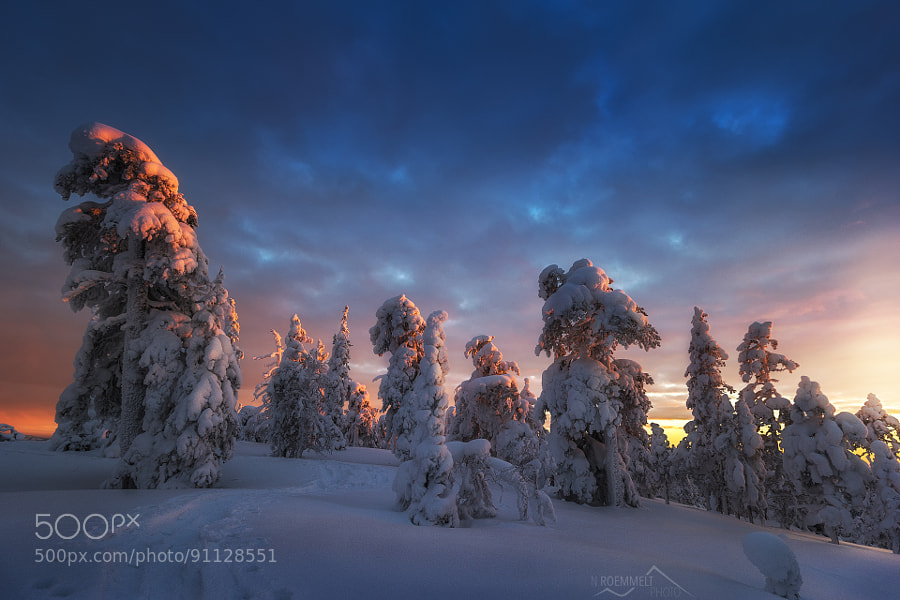 Photograph Winter sunset by Nicholas Roemmelt on 500px