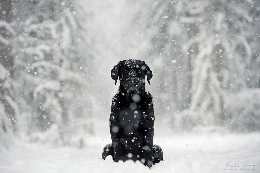 alfred by Viktoria Haack on 500px.com