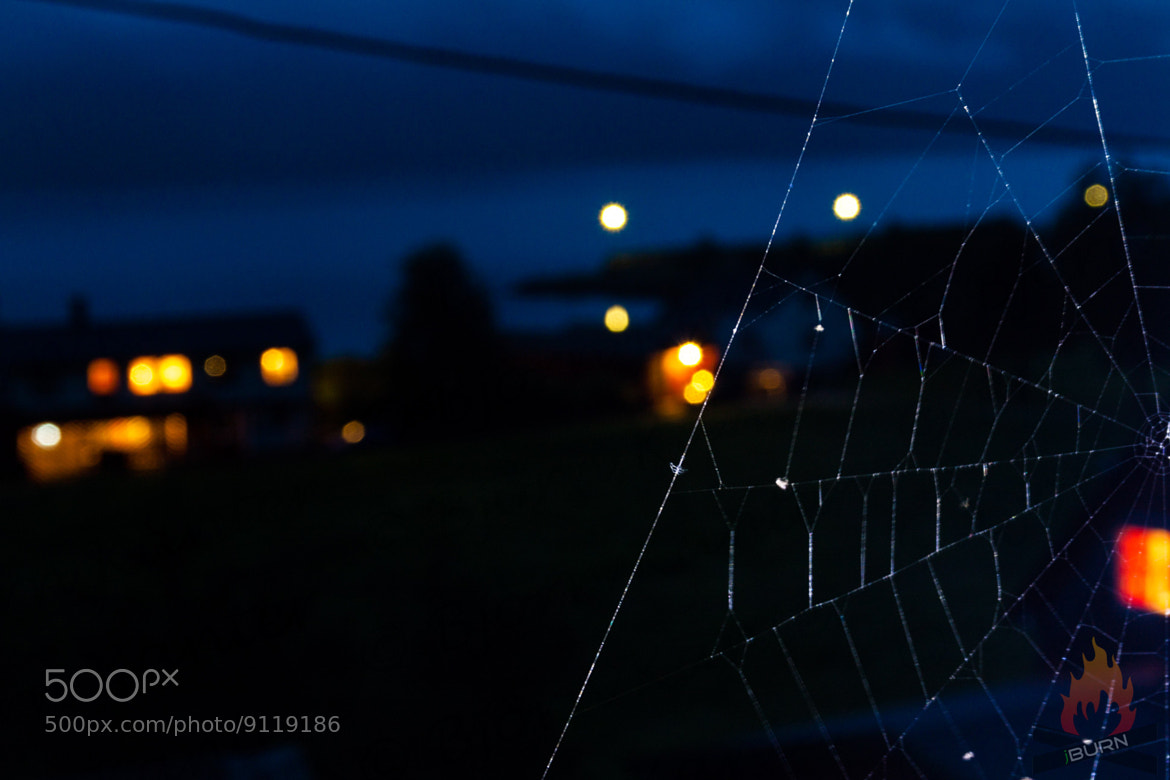 Photograph I think I spider by Björn Kanter on 500px