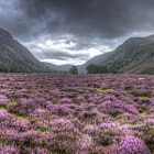 Постер, плакат: Glen Feshie in Bloom