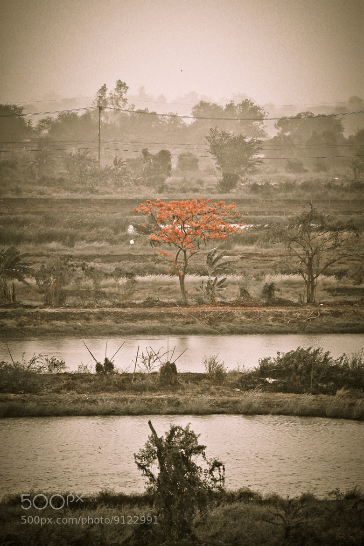 Photograph Rains season thailand by art friday on 500px
