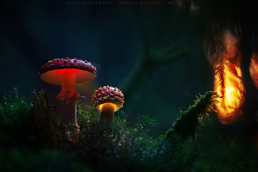 Photograph . : evil mushrooms : . by Martin Pfister on 500px