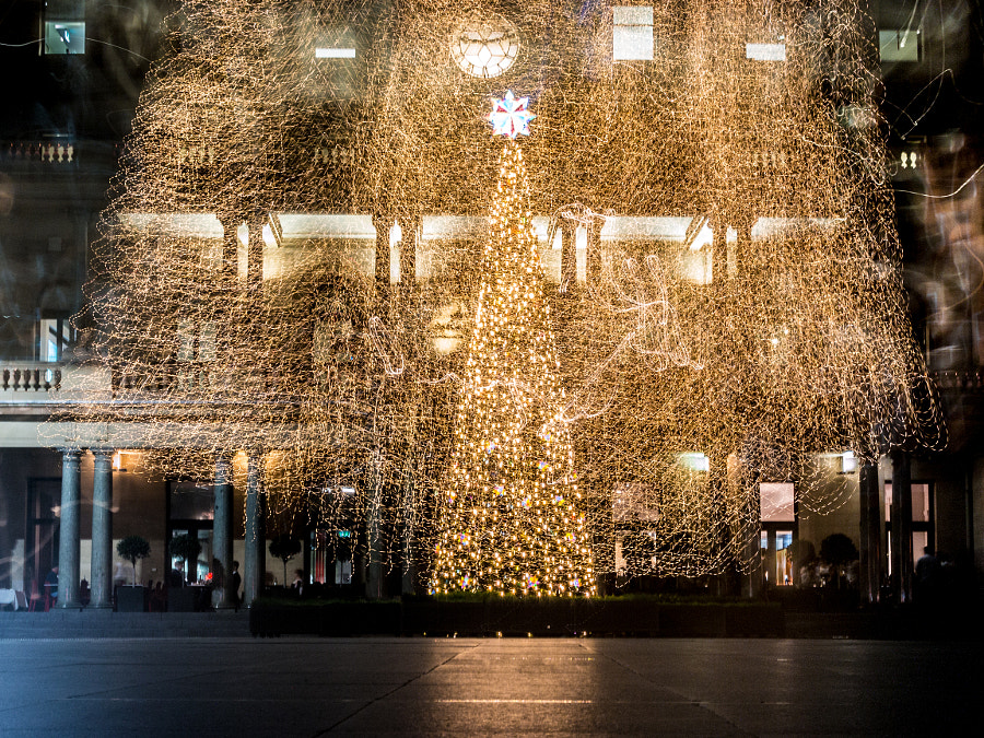 Photograph Custom House Sydney Christmas Tree 2014 by Travis Chau on 500px