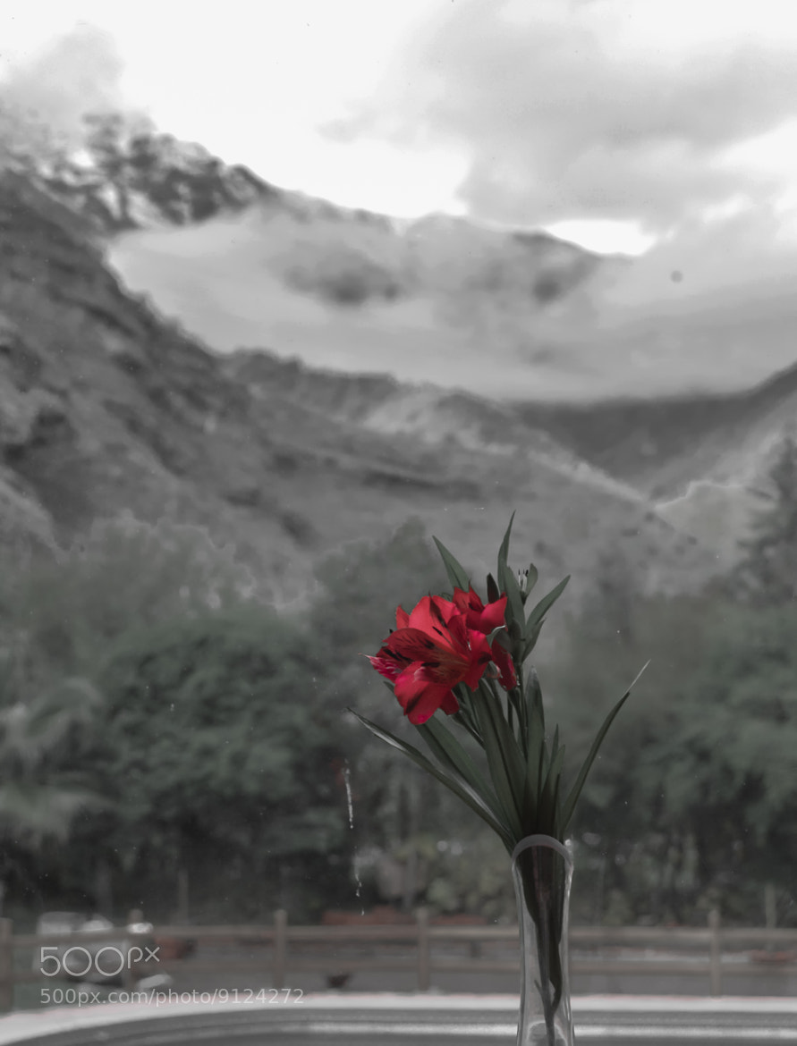 Photograph Red flower against the mountains by RICARDO OLGUIN, MD on 500px