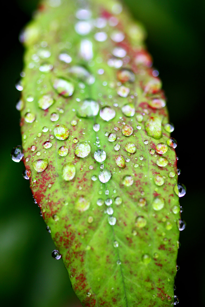 Photograph Rain's Drops 2  by Mohammed Attar on 500px