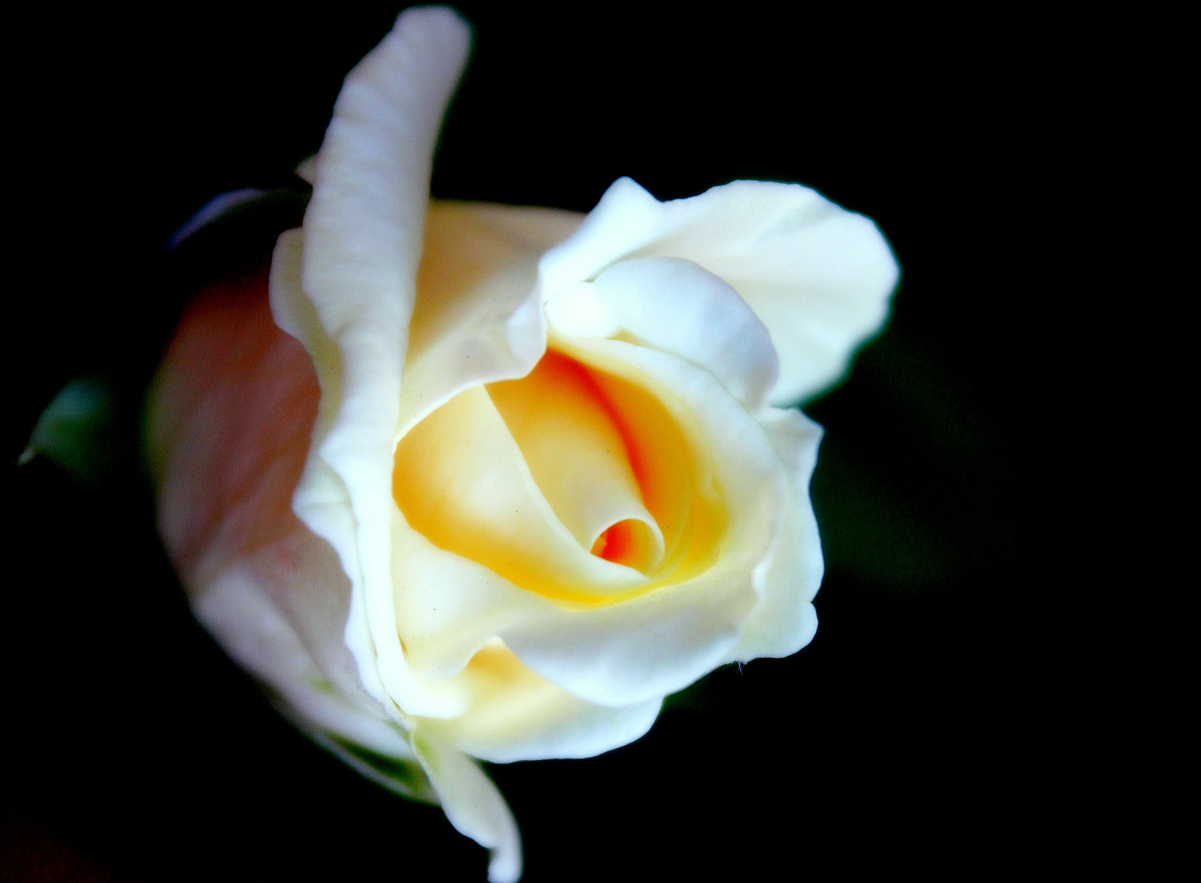 Photograph The Bud by Manaswinee Mohanty on 500px