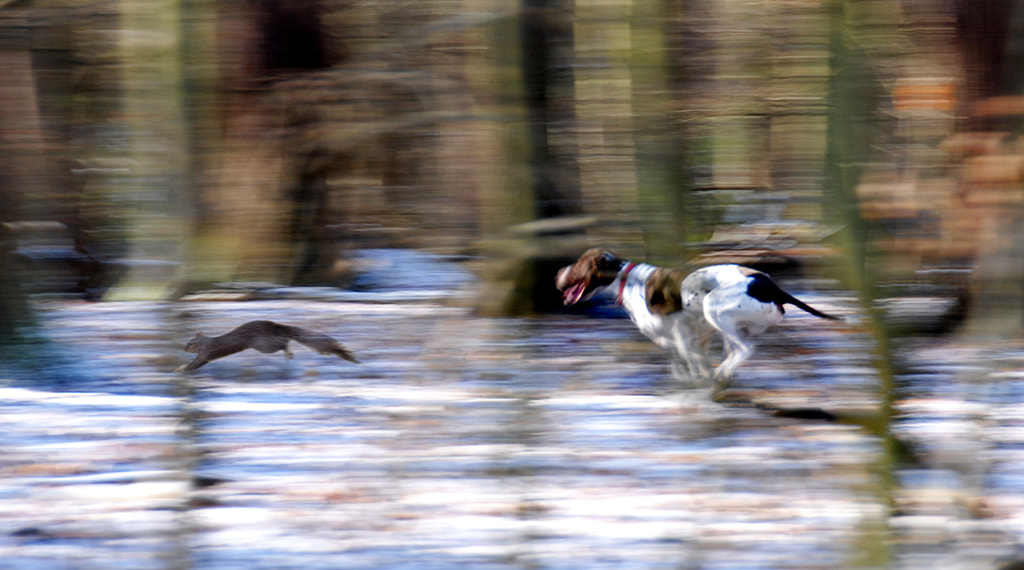 Photograph A Chase in the Woods by Andrew Chu on 500px