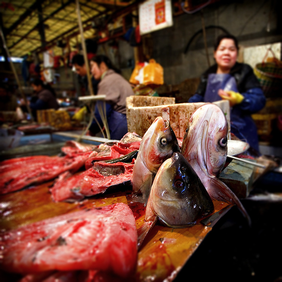 Photograph Fish Head Soup Anyone? by Michael Steverson on 500px