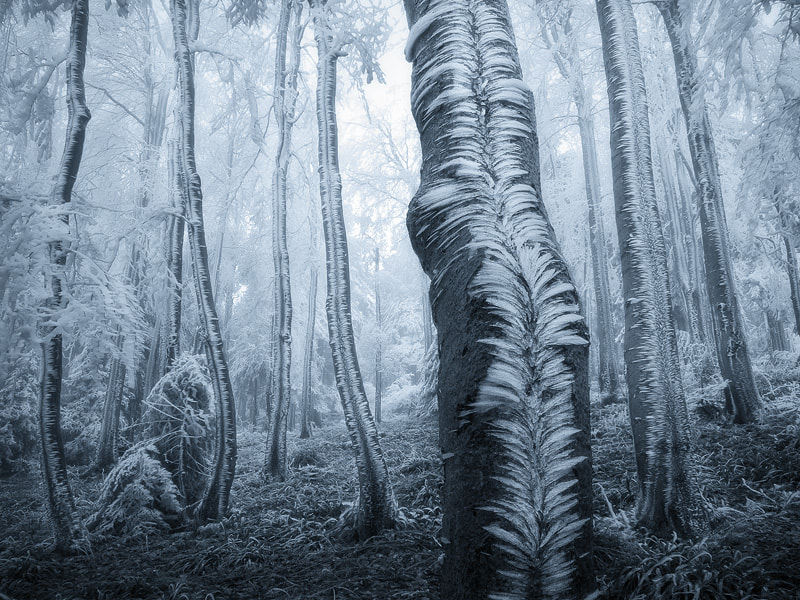 Frost on the Trees by Jan Bainar on 500px.com
