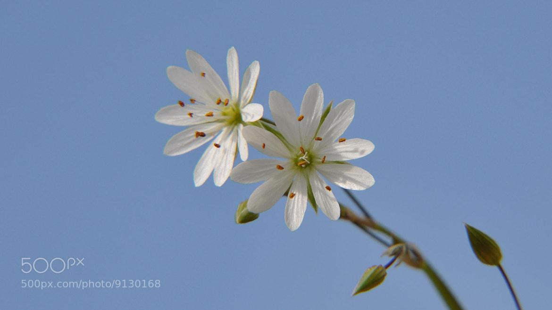 Photograph Полевые цветы by Alexey D on 500px