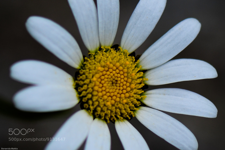 Photograph SunFlower by Mattia Bonavida on 500px