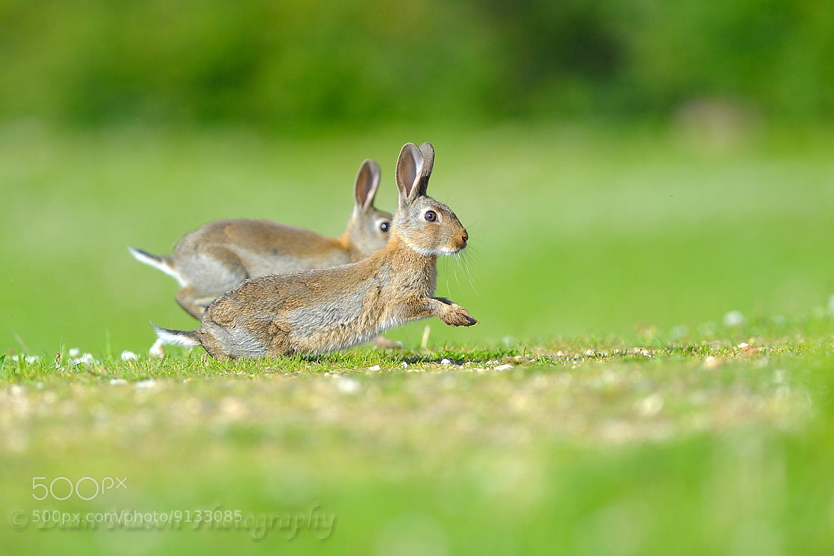 Photograph The Rabbit Race by Dean Mason on 500px
