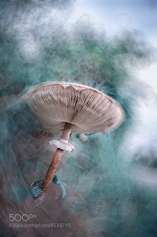 Photograph Tchernobyl's mushroom * by BLOAS Meven on 500px
