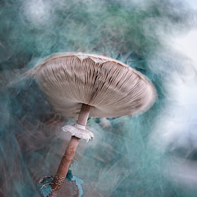 Tchernobyl's mushroom * by BLOAS Meven (capuchon29)) on 500px.com