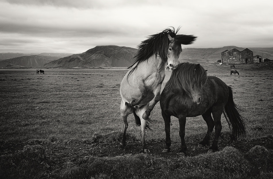 Photograph Wild horses by Izidor Gasperlin on 500px