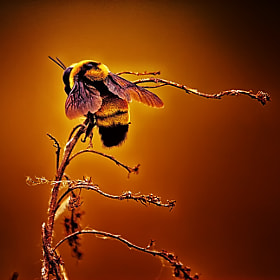 Hot Buzz by Bill Tiepelman (oddballz)) on 500px.com