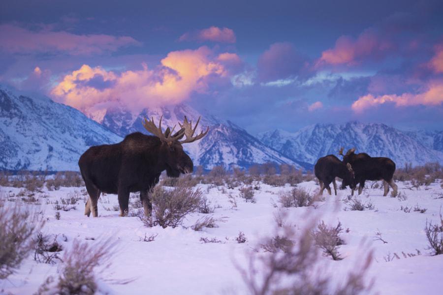 Winter's Vibrance by Chase Dekker on 500px.com