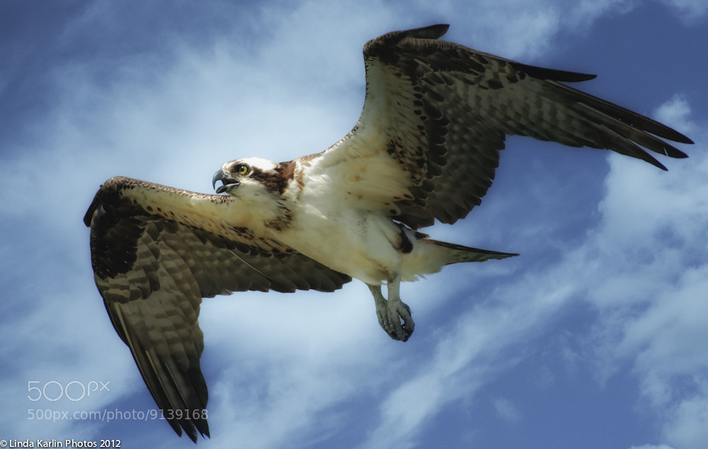 Photograph Flying High by Linda Karlin on 500px