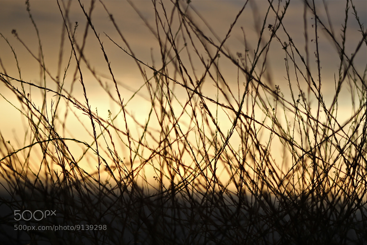 Photograph Natures Barbed Wire by Taylor Koepke on 500px