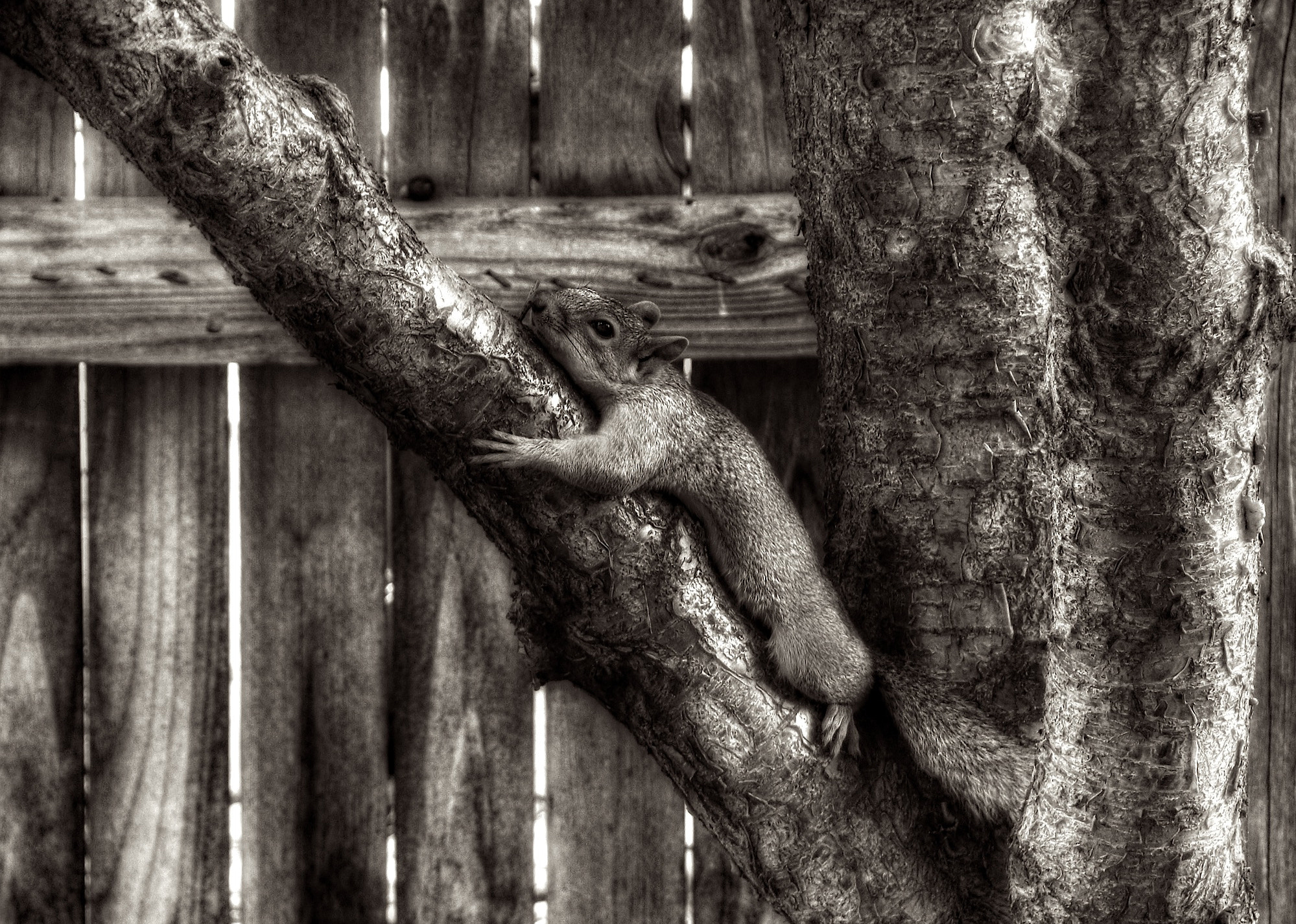 Photograph Squirrel  in Cherry Tree by Rick  W on 500px