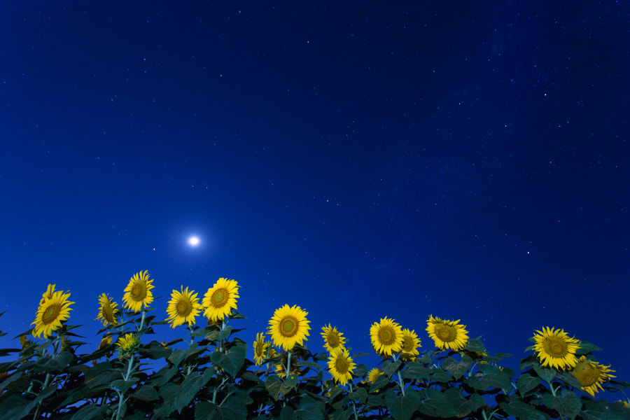 Moonflowers by Chainfoto Krainukul on 500px.com