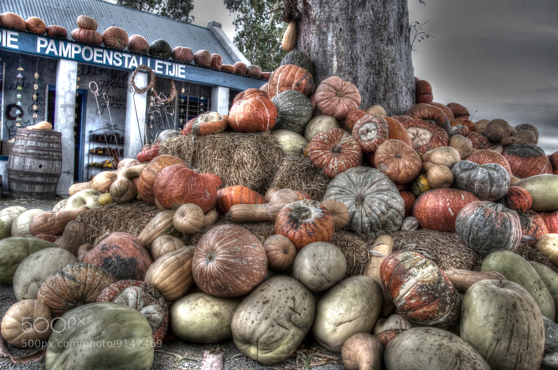 Photograph Pumpkin Patch by karin Amm on 500px