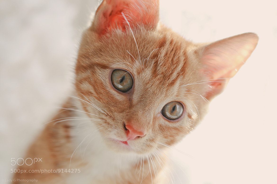 Photograph Ginger spice by Gina Parry on 500px