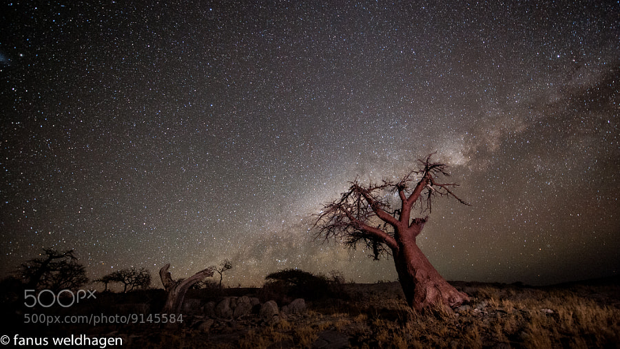 The Milky Way performing a balancing act on one of Kubu's Baobabs