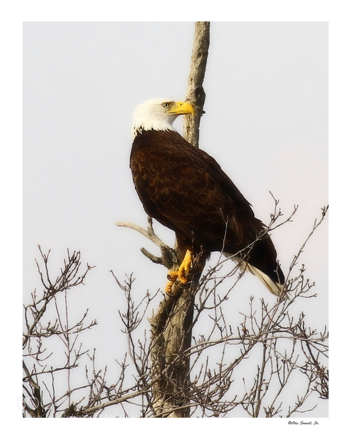 American Bald Eagle considering its options.  Considering your surroundings can be very beneficial, even lucrative! Eagles do this by instinct. People, conversely,  might do this out of wisdom,  and sometimes out of fear. But still, it is good to have the ability to choose.