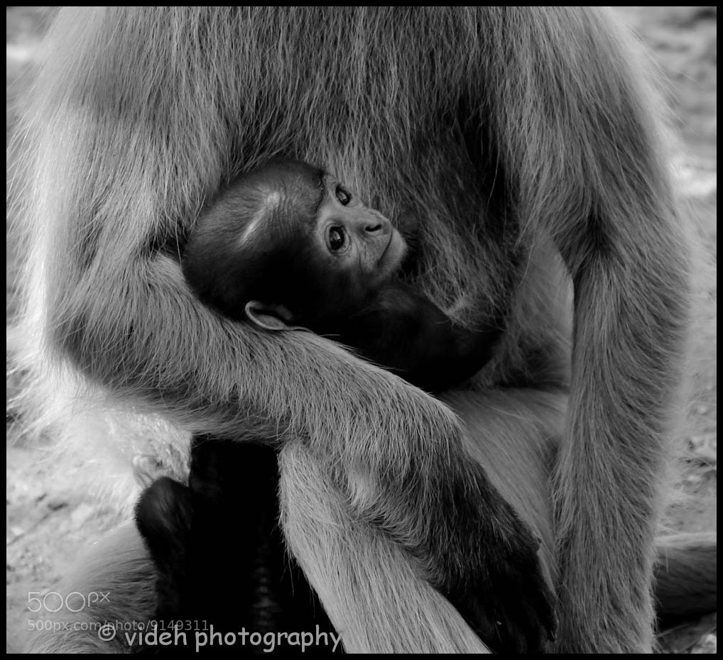 Photograph the Motherhood by Videh Jain on 500px