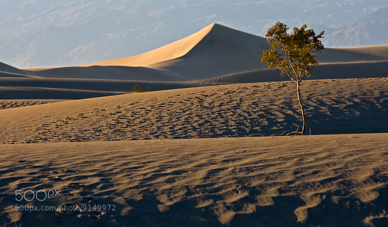 Photograph Mesquite Sand Dunes by Nick Bell on 500px
