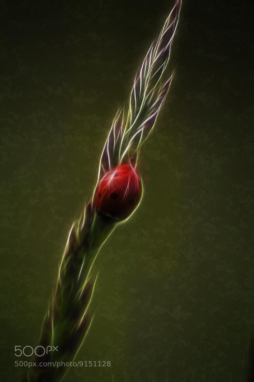 Photograph Ladybug World by Donnie Nunley on 500px