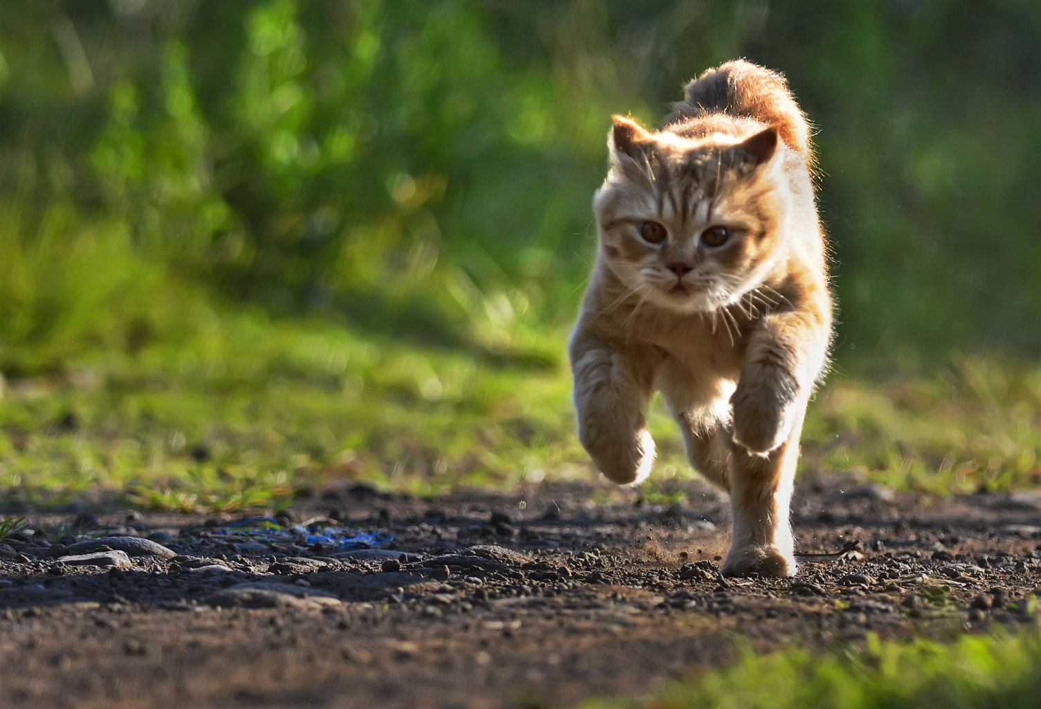 Photograph I'm Running, not skulking.. by Teguh Hariyanto on 500px