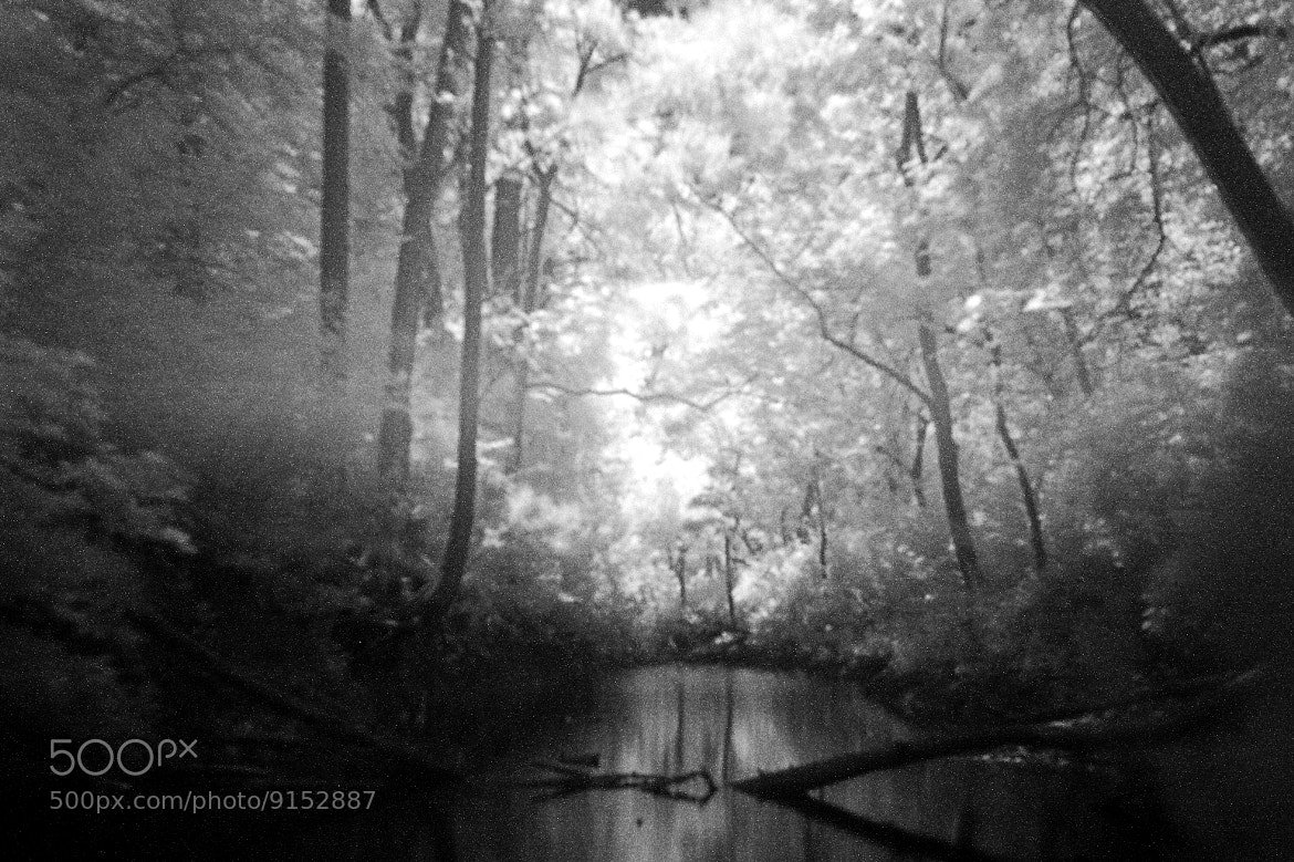 Photograph Into the Woods by Rita Simon on 500px