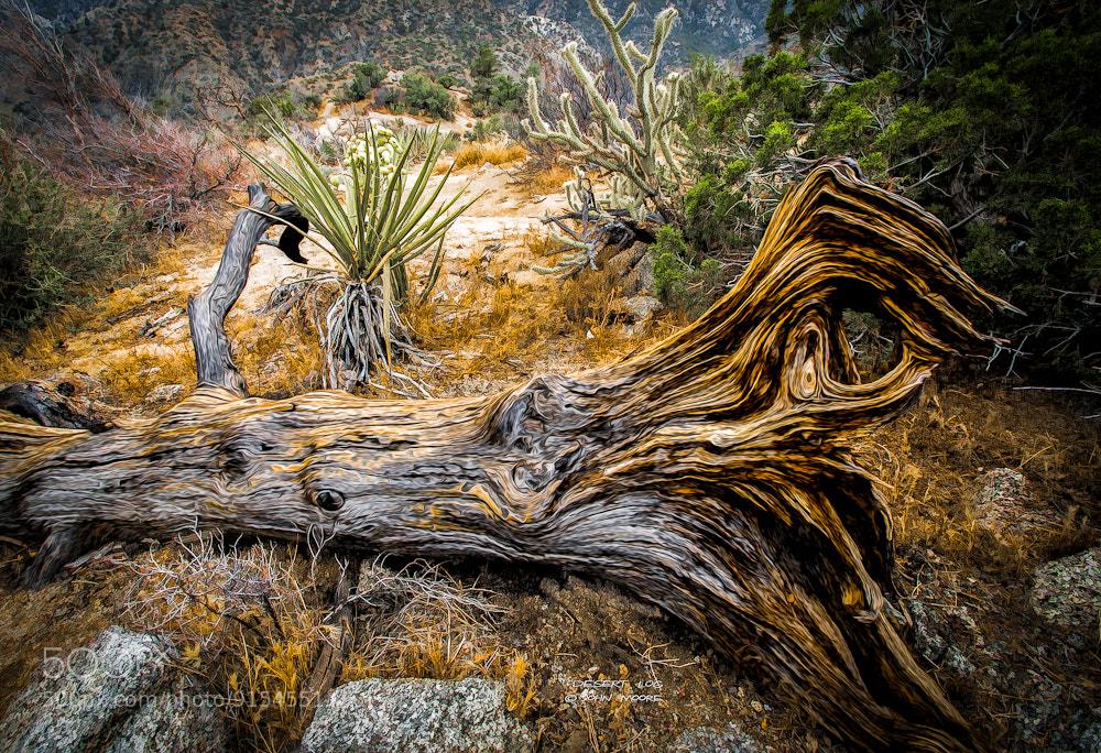 Photograph Desert Log by John Moore on 500px